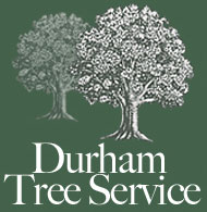 Home: Durham Tree Services
